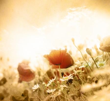 Grunge poppies background  photo