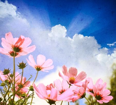 bordes decorativos: Foto de un flores pegadas sobre un fondo grunge