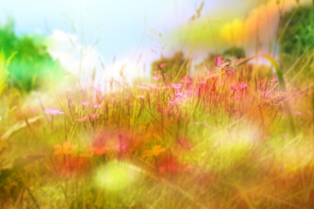 lowers: Flower background. Beautiful flowers with color filters  Stock Photo