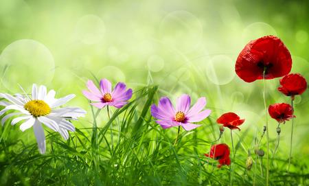 Gebied van de lente bloemen en zonnige dag