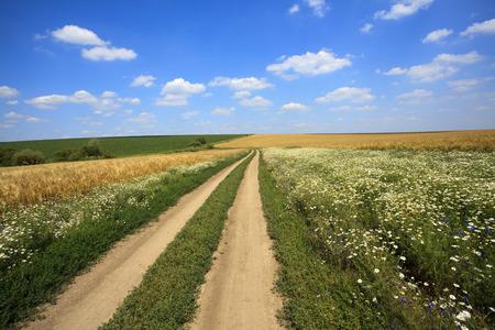 Rural road through the field  photo