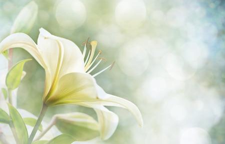 Lily Bloemen grens design.Spring Bloemen