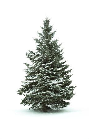 arbol de pino: Árbol de Navidad - aislada sobre fondo blanco Foto de archivo