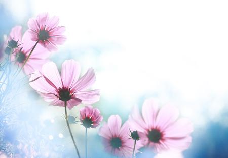 campo de flores: Campo de las flores y la luz del sol Foto de archivo