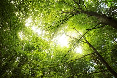 春の時間緑の森の日光 写真素材