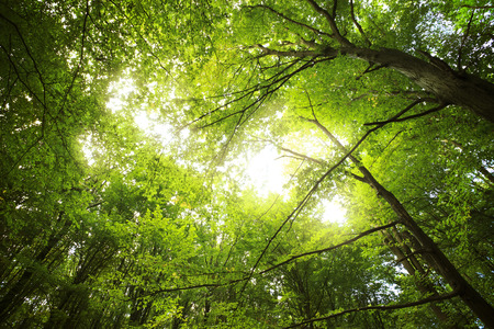 녹색 숲에서 햇빛, 봄 시간