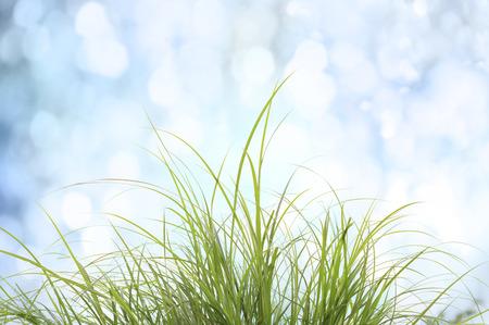 春天或夏天的背景与花园里的草