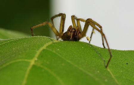 A macro shot of a spider in the jungle Фото со стока