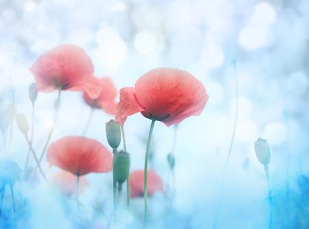 poppy leaf: Poppy flower in the sky