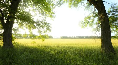 tree in field: landscape with tree on the field