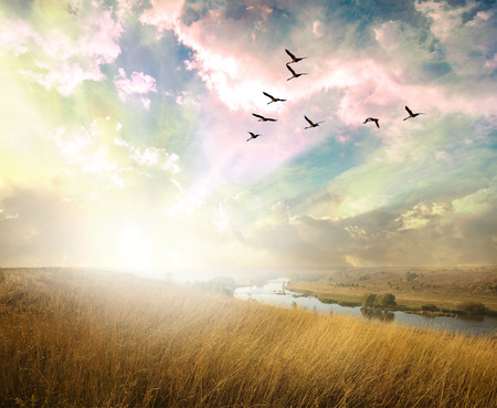 Green field of grass and flying birds Imagens