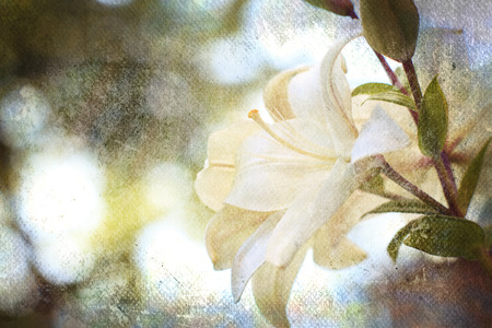 alstromeria: Textured old paper background with flowers Stock Photo
