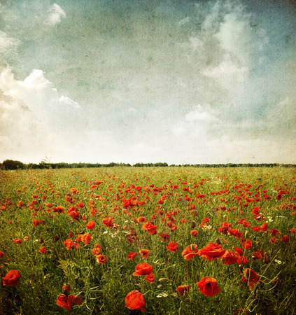 Photo of a poppies pasted landscape on a grunge background
