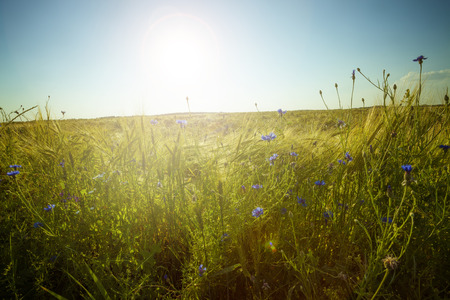 Green meadow under blue sky with clouds. Beautiful nature sunset landscape Stock Photo