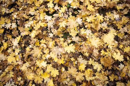Seasonal autumn background of colorful leaves. Stock fotó
