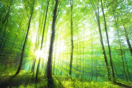 Luce solare nella foresta verde, tempo di primavera