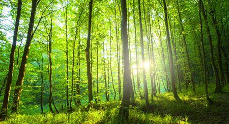 Sonnenlicht im grünen Wald, Frühlingszeit