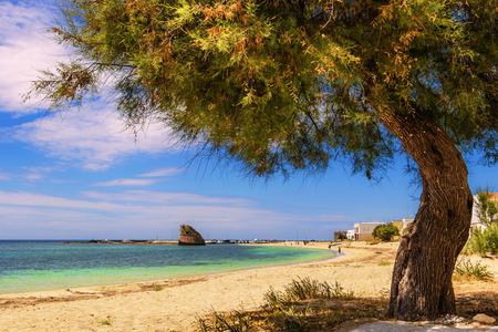paisaje mediterraneo: Las más bellas playas de arena de Apulia. costa de Salento: Torre Pali playa Lecce. Nombre ITALIA Apulia..Its proviene del siglo XVI watchtowe.The baja costa de arena se charactherized por dunas cubiertas de Mediterráneo scrubFrom Torre Pali Pescolu Foto de archivo