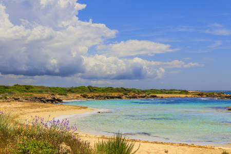 scrub grass: Mediterranean maquis. Salento coast, Lido Marini beach Lecce. Stock Photo