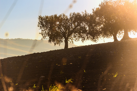 hilly: Rural autumn landscape, hilly landscape with olive grove. Stock Photo