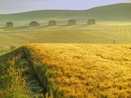 farmhouses: Rural spring landscape. Between Apulia and Basilicata: wheat field at dawn.ITALY.Hilly country.Green wheat field at sunset: in the background abandoned farmhouses.