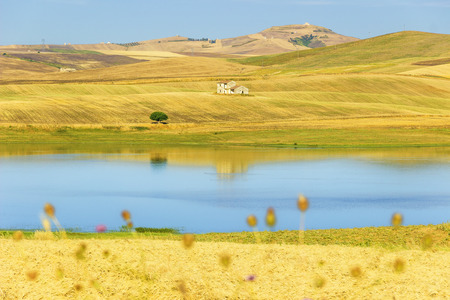 farmhouses: RURAL LANDSCAPE SUMMER.Between Apulia and Basilicata: Farmhouses surrounded by grain fields. Lake Basentello, Poggiorsini (ITALY)