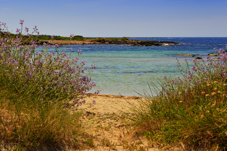 scrub grass: The most beautiful sandy beaches of Apulia. ITALY (SALENTO) .From Torre Pali Pescoluse to the shore is made of a so fine white sand and clear sea vashed by to know That it is called Maldives of Salento. Stock Photo