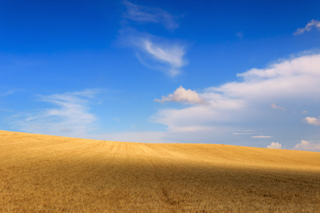 Between Apulia and Basilicata.Hilly landscape with cornfields.ITALY.Hilly landscape: cornfields between light and shadow.