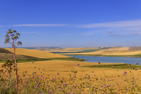 RURAL LANDSCAPE SUMMER.Between Apulia and Basilicata: cereal fields in the early morning. Poggiorsini (Bari) -Italy- Basentello Lake surrounded by cultivated hills. Basentello Lake surrounded by cultivated hills. Stock Photo