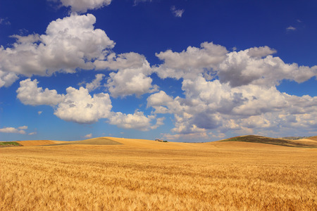 champ de mais: RURAL LANDSCAPE SUMMER.Between Apulia and Basilicata: hilly landscape with cornfield dominated by a clouds.ITALY. Farmhouse on a hill between fields of grain. Banque d'images