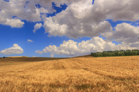 RURAL LANDSCAPE SUMMER.Between Apulia and Basilicata: hilly landscape with cornfield dominated by a clouds.ITALY. Olive grove on a hill between fields of grain.Countryside with wheat fields dominated by clouds. Stock Photo
