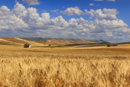 RURAL LANDSCAPE SUMMER.Between Apulia and Basilicata: countryside with cornfield dominated by a clouds.ITALY. Hilly countryside: in the background abandoned farmhouses and bales of hay. Stock Photo