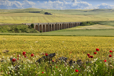 Between Apulia and Basilicata.Spring rural landscape: railway bridge on the green wheat field.Apulia.ITALY .Rural vernal landscape with wildflowers: poppies in a field with unripe cornfield. Stock Photo
