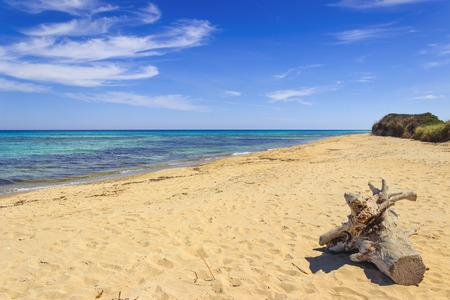 지역 자연 공원 모래 언덕 Costiere, (Apulia) 이탈리아. 바다 수평선 : 모래 beach.The 공원에서 트렁크는 해안선의 8 킬로미터를 따라 Ostuni, 토레 칸느