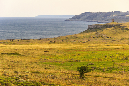 The most beautiful coasts of Italy: spring landscape. Salento (Apulia).The Otranto Santa Maria di Leuca Coast and Tricase Woods Regional Nature Park:in the background Sant Emiliano tower.With a coast longer than fifty kilometers and a territory extending