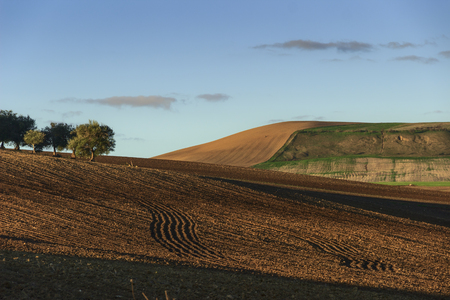 Between Apulia and Basilicata: hilly landscape with olive grove on plowed land dominated by sky, Italy. Banco de Imagens