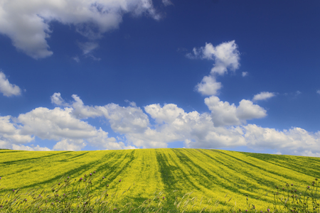 Hilly rural landscape. Spring horizon with green grass and yellow flowers field under blue sky and clouds, Italy (Apulia).
