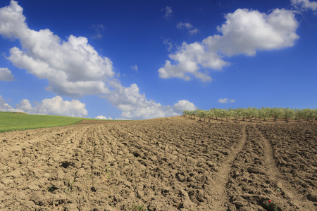Between Apulia and Basilicata: hilly landscape with olive grove on plowed field dominated by clouds, Italy.