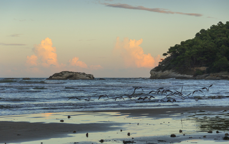 Seagulls flying between  waves breaking on sandy shoreline after sunset. Gargano coast: Portonuovo beach, Apulia (Italy).