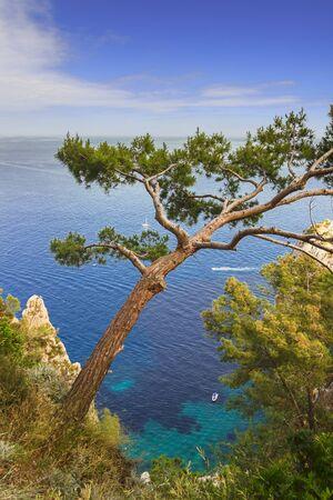Mediterranean sea with blue boats, maritime pine and rock cliffs in Capri island, Italy. 版權商用圖片