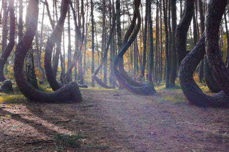 A weird curious forest in Poland.