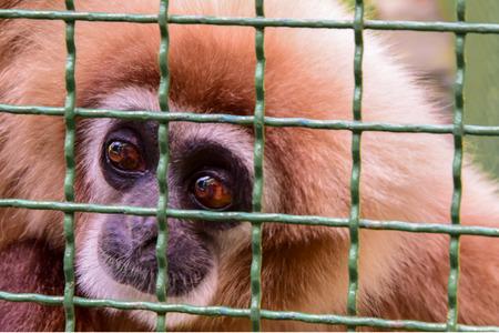 Animal murders. Keeping monkeys in cages.