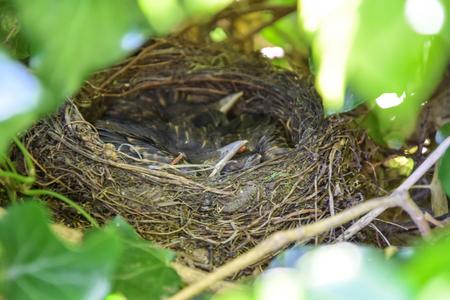 bird's nest in the bush