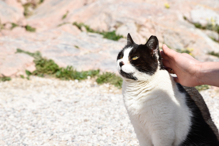 Homeless cat stroke in Greece