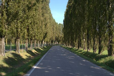 An evocative tree-lined avenue in the Italian countryside.