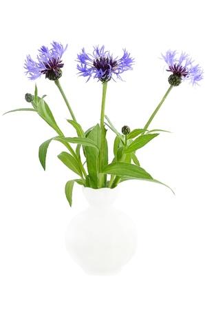 Bouquet cornflowers in the white ceramic vase isolated on white background  photo