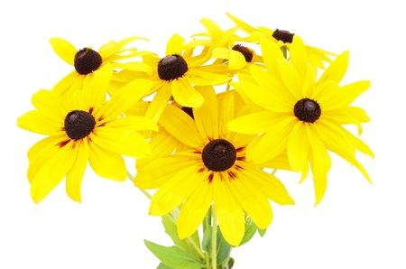 Bouquet of yellow rudbeckia flowers isolated on white background photo