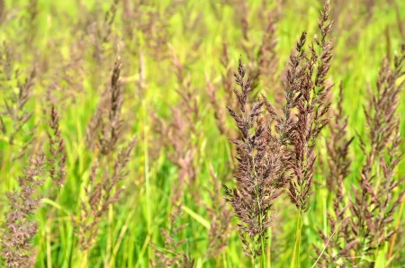 carex: Stems of sedge in the field Stock Photo