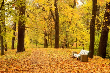 Bench in the beautiful autumn park photo