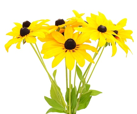 Bouquet of yellow rudbeckia flowers isolated on white background